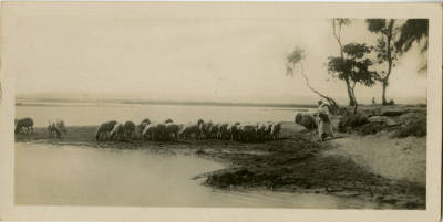 "<bdi class=""metadata-value"">A Shepherd and his flock on the Nile border</bdi>"
